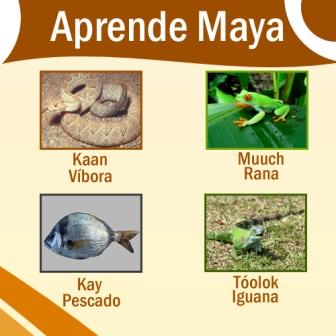 Aprende-Maya-animales